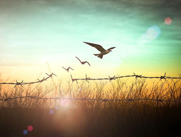 Vögel frei fliegen