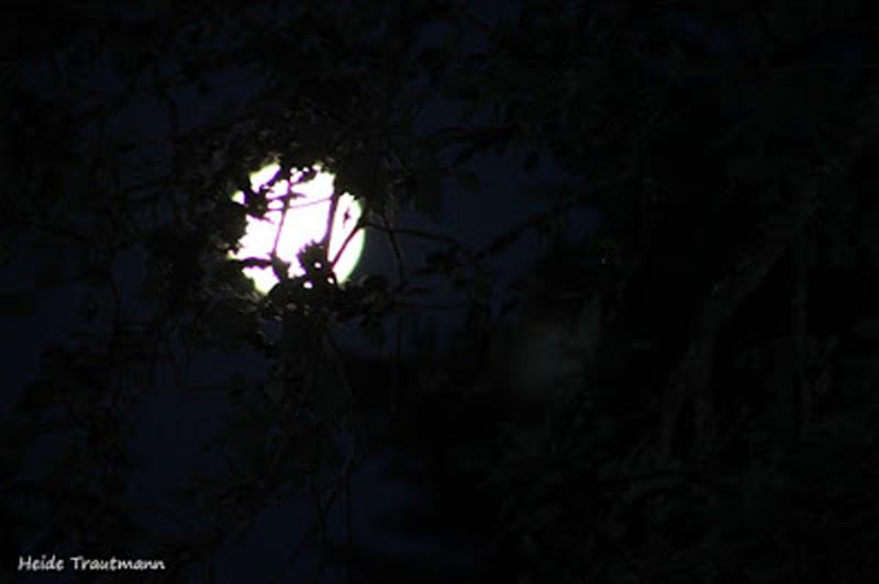 Mond am 30.7.2015 23 Uhr